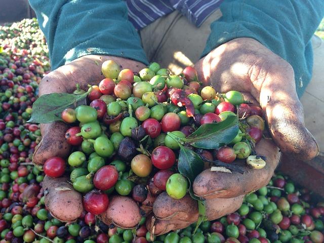 Fresh Farm coffee - coffee-mills