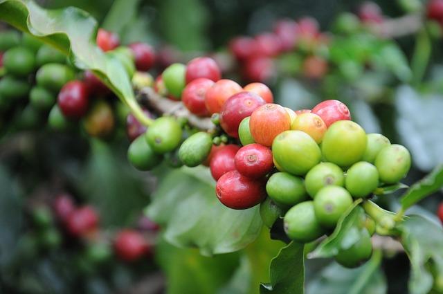 Coffee Beans - Coffee Mills