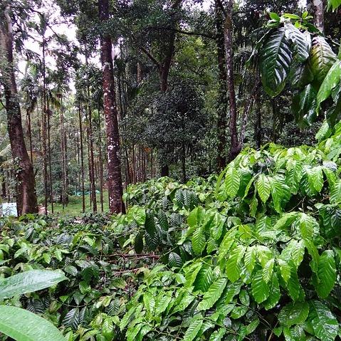 Coffee Plantation - Coffee Mill